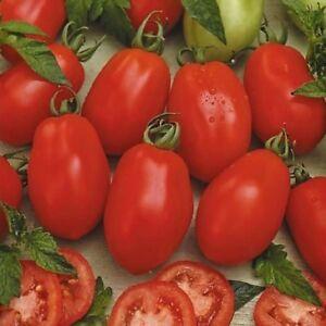 Tomato Rio Grande 100 seeds ORGANIC / NON GMO