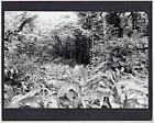 "HANA ROAD JUNGLE SCENIC, MAUI, ORIGINAL PHOTO ON 8X10"" MATT  BY PHOTOGRAPHER"