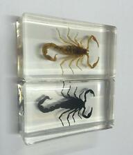 PAIR Fashion Gothic Scorpion in Clear Lucite Resin Paperweights Specimen
