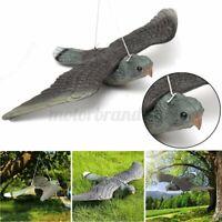 Scaccia Spaventa Passeri Piccioni Uccelli Giardino Volatili Falco Bird