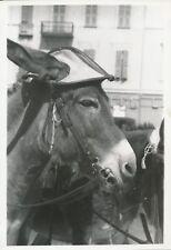 NICE c. 1935 - Âne coiffé d'une Casquette Alpes-Maritimes - Div 11724