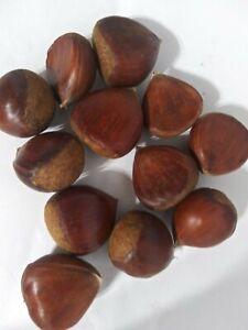 Raw Organic Chestnuts (~0.5 lb)