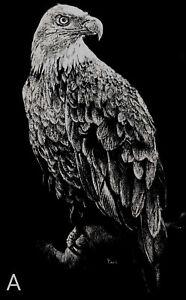 Vintage David Omar White Laser Photo Art Scratchboard Eagle Bird Print 1981