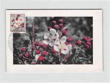 BELGISCH CONGO BELGE MK 1958 FLORA OCHNACEAE CARTE MAXIMUM CARD MC CM d9436