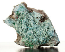 """4.3"""" Vibrant Turquoise PLANCHEITE Radiating Acicular Crystals D.R.Congo for sale"""