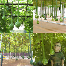 10pcs Bottle Gourd Seeds Organic Vegetables Seeds Dipper Gourd Garden Plant