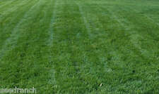 Titan Rx Turf Type Tall Fescue Grass seed (Certified) - 50 Lbs.