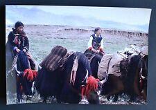 Tirage Original - Tibet - Superbe Photographie - Circa 1980 - Scène de Vie - Yak