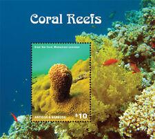 Antigua Barbuda-2014-Marine life-Coral reefs