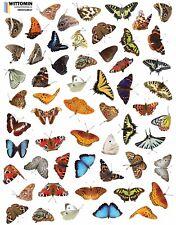 Aufkleber Sticker Fenster Wandsticker Wandaufkleber Kleine Schmetterlinge Möbel