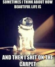 Men's Ladies T SHIRT funny pug Dog Philosopher poop carpet comedy pup
