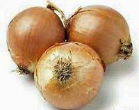 ONION, SPANISH YELLOW, HEIRLOOM, ORGANIC 25+ SEEDS, SWEET, GREAT FOR COOKING