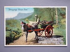 R&L Postcard: Bringing Home the Peat, Donkey & Cart, Ireland/Eva Brennan