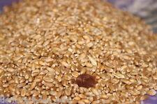 15kg Weizen Weizenkörner Körnerkissen Futterweizen Enten Geflügel Hühnerfutter