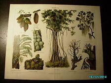 PLANTS EPIPHYTES, MEYERS CHROMO PRINT
