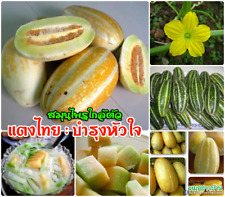 20 seeds Cucumis melo from thailand