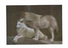 wolf white photography 3D Lenticular Holographic Stereoscopic Picture Wall Art