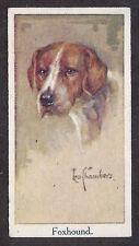 1924 Uk Leo Chambers Dog Art Head Study Moustafa Cigarette Card English Foxhound