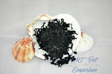 Wakame Seaweed - Hermit Crab Food