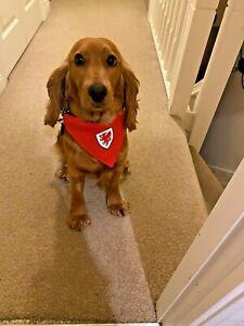 Wales Euro Euros Football Dog Bandana Welsh Badge Slip on Collar Neck Tie
