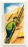 Rick Thatching Sheaves Of Corn For Protection Vintage Trade Ad Card