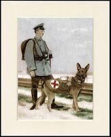 GERMAN SHEPHERD RED CROSS WAR DOG LOVELY LITTLE PRINT MOUNTED READY TO FRAME