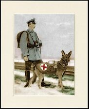 GERMAN SHEPHERD RED CROSS WAR DOG LOVELY LITTLE PRINT MOUNTED READY TO FRAME