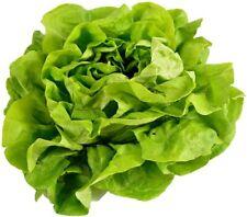 Buttercrunch Lettuce Seeds | Vegetable Seeds for Planting Home Garden | Non-Gmo