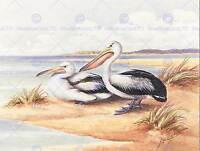 PAINTING ANIMAL BIRD CAYLEY AUSTRALIAN PELICAN PAIR ART PRINT POSTER LAH611