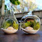 2pcs Hanging Glass Ball Vase Flower Planter Pot Terrarium Container Garden Decor