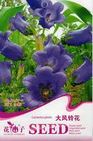 30 Original Package Seeds Big Wind Bell Flower Seed Campanula Flowers A267