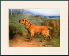SPRINGER SPANIEL dog fine art print /'Great Expectations/' by Lynn Paterson