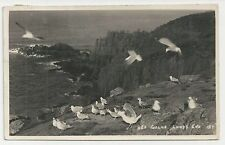 Old Postcard, Sea Gulls at Lands End, Cornwall, Posted 1951