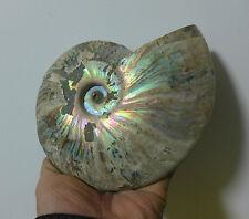 980g A+++ Original Iridescent silver Ammonite Fossil specimen Madagascar A74#