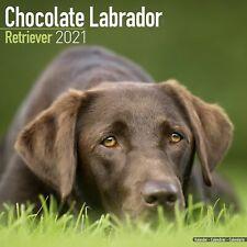 Labrador Retriever Chocolate Calendar 2021 Premium Dog Breed Calendars