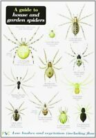 Richard Lewington - A Guide to House and Garden Spiders