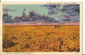 Amarillo Texas Wheat Field Scene Vintage Postcard  c.1935 TX C13