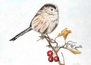 "ACEO  2.5 X 3.5"" 'Long Tailed Tit' Bird CANVAS PRINT of Original Watercolour"