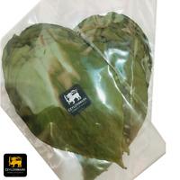 Betel Leaves ✔Dried Leaf Betel Leaf ✔Ceylon|Sri Lankan ✔100%Organic ✔20Leaves