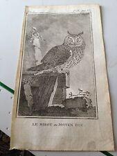 le hibou ou moyen duc (owl ) steel engraving 1760