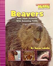 Beavers and Other Animals with Amazing Teeth