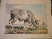 Pieter Gerardus VAN OS (1776-1839) Gravure XVIII VACHE HOLLANDE ANIMAUX DEN HAAG