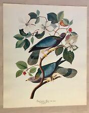 Beautiful Vintage Bird Birding Aviary Art Print Ornithologist Twitcher Pigeon