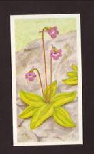 Common Butterwort--1990 Brooke Bond British Tea Card