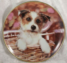Jack Russell Terrier jack in the basket by M Haywood by Danbury Mint plate