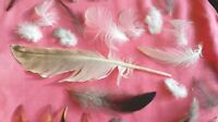NATURAL FEATHERS x30 Seagull+ Cockerel, Pigeon free fallen feathers 4 craft UK