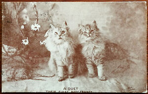 Two Cats, A Duet, Their First Appearance. Post Card