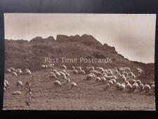Spanish Flock / herd of SHEEP and shepherd - Old RP Postcard