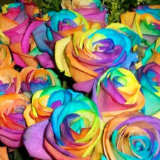 600pcs/Bag Colorful Rainbow Rose Flower Seeds Garden Plants Mysterious Seed