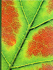 Plant Physiology, Salisbury, Frank Boyer & Ross, Cleon, Used; Good Book